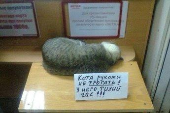 Невозможно не любить котов (10 фото)Невозможно не любить котов (10 фото)