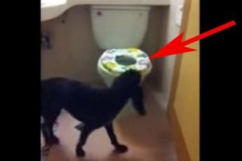 Хозяин заснял свою собаку в туалете на камеру. Это видео приобрело бешеную популярность.