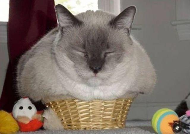 10+ очень наглых котов, которых ничто не смущает
