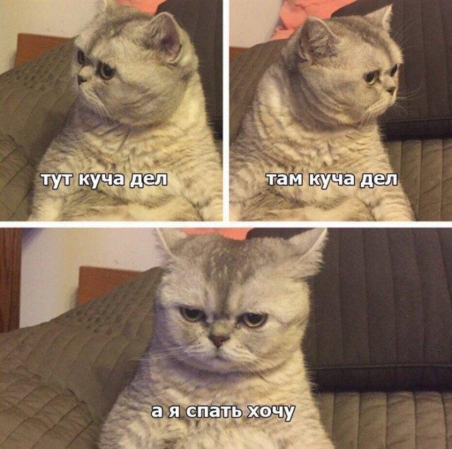 13 Смешные картинок с котиками