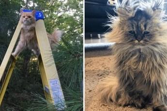 15 смешных фотографий котов, которые оказались в ситуациях очень похожих на наши. Очень похоже на людей, если бы не мех.