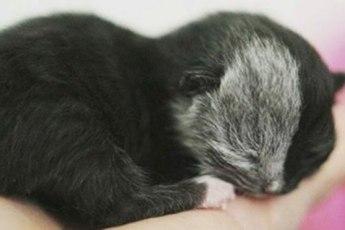 Кошка, рожденная с «двумя лицами», выросла и вот как она выглядит сегодня