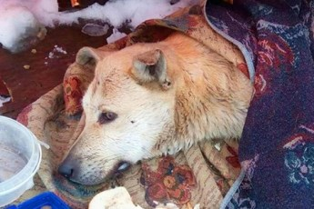 Раненая собака тихо умирала в парке… Люди шли мимо, но внезапно кто-то остановился рядом…