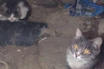 Кошку с котятами достали из бетонного колодца, где они были обречены на голодную смерть.
