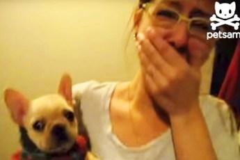 Невероятный ответ собачки на фразу «Я люблю тебя» от хозяйки