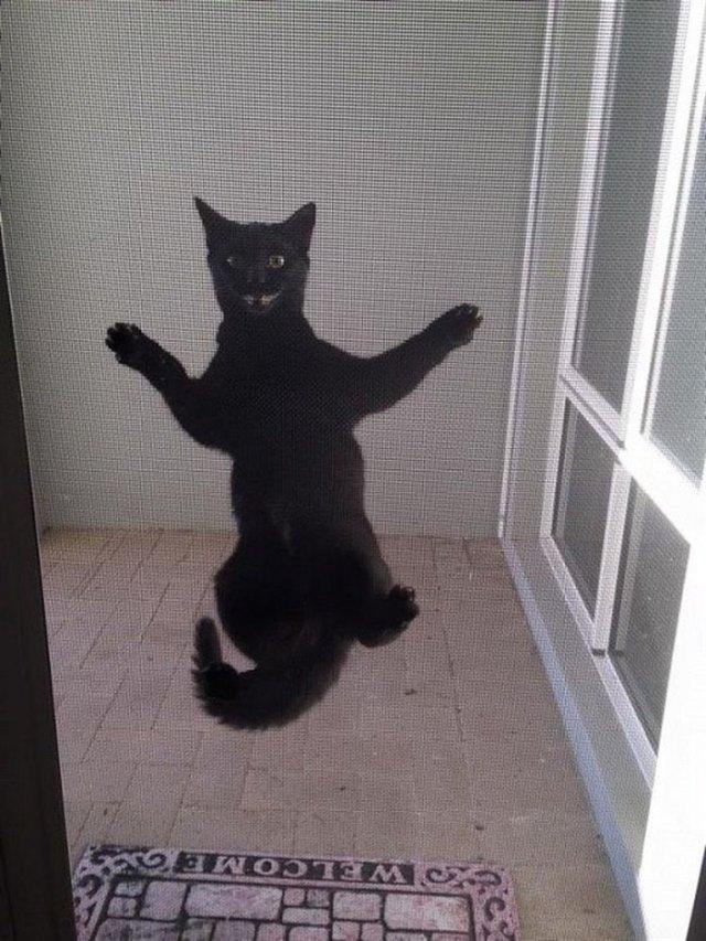 15 подтверждений того, что страннее котов на земле ни кого нет