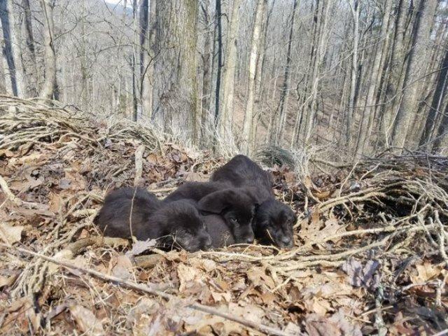 Бегун замер, услышав странный шум в лесу. Затем он обнаружил чёрную кучу и осознал нечто ужасное