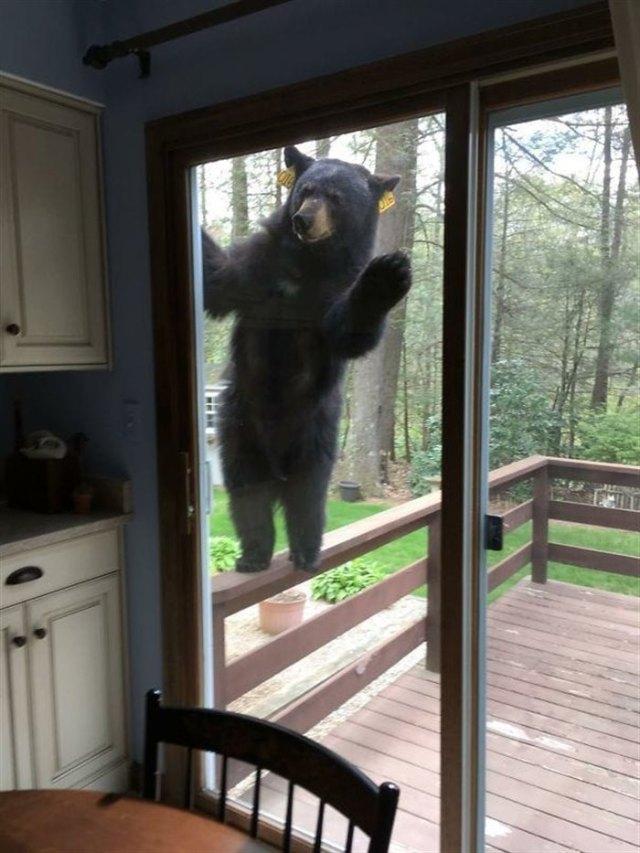 20 фотографий животных, которые однажды пришли в гости, но решили остаться навсегда.