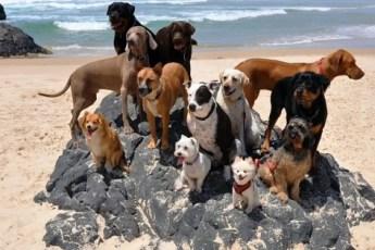 Мужчина привёз 12 собак и одного кота на пляж. То, что они сделают, — умора, да и только!