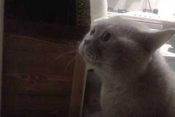 Вы такого еще не видели! Кот хочет выйти и говорит хозяйке «Открой мне!»