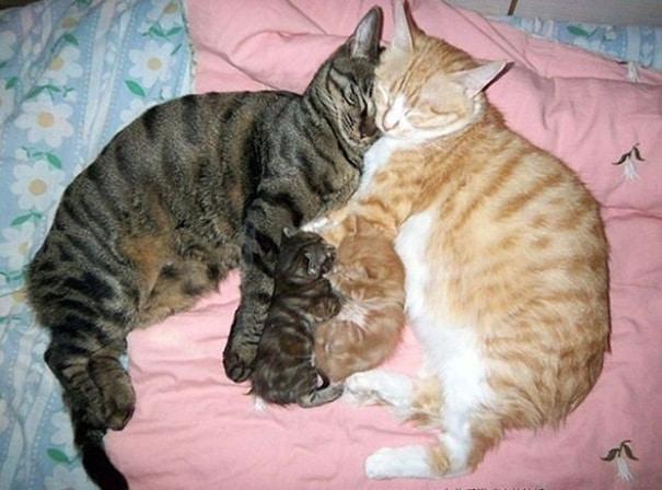 15 мамочек-кошек, которые явно гордятся своими котятами