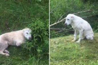 Волонтеры нашли 14 щенков алабая возле дороги. История их появления там кажется нереальной!