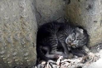 Рожденный на улице и оставшийся в одиночестве котенок не утратил надежду обрести любящую семью