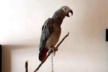 Рассказ про красную шапочку от попугая сказочника