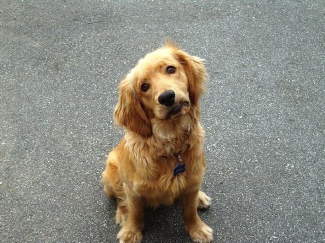 20 самых милых щеночков, растопят любое сердце своей нежностью