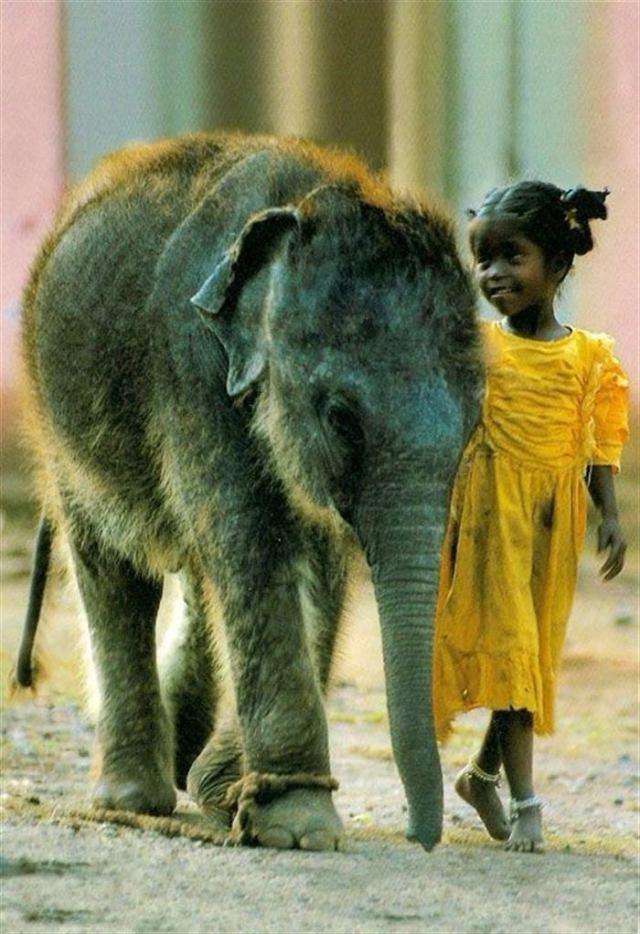 Трогательные фотографии о любви животных и детей
