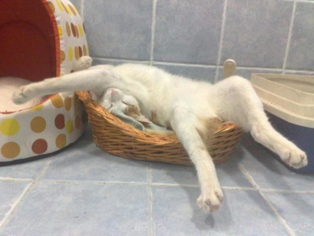 22 фот котов, которые внезапно решили поспать