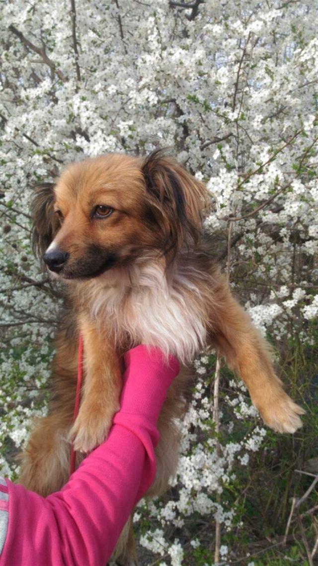 Голодному псу дали сосиску, а он… отнёс её кошке! История бездомного Вайзика с ушами-бабочками