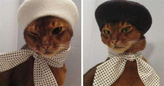 17 фотографий животных, которые своей милотой, обязательно сделают ваше настроение чуточку лучше