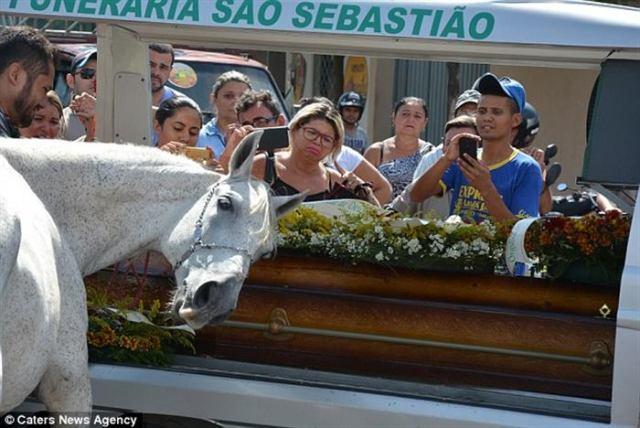 Конь пришел попрощаться с хозяином. Когда животное наклонилось к гробу, у него потекли слезы…Толпа онемела…