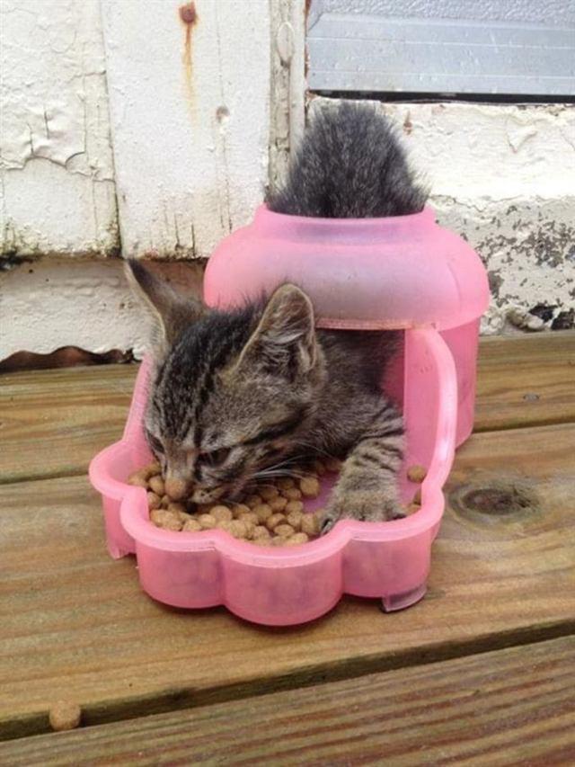 Кошачью логику дано понять не каждому