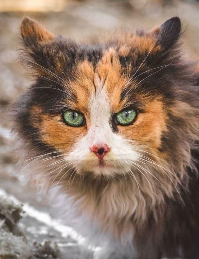 «Они смотрят по особенному!» — фотограф показал жизнь бездомных котов