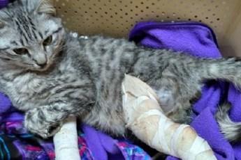 Бедного котика выбросили из окна, но его спасла добрая прохожая