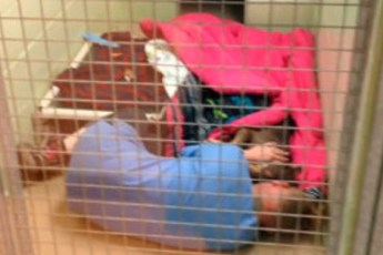Работница приюта решила проведать собачку после операции, но то что она там увидела просто удивительно…