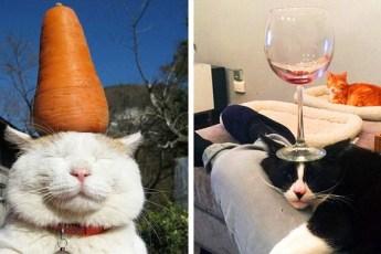 15 примеров максимального спокойствия котов. Их ни что не может побеспокоить!