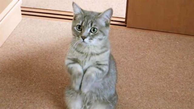 15 забавных котов, которых их хозяева забыли покормить, и пожалели об этом