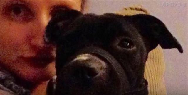 Волонтеры вынуждены были сообщить хозяину о смерти собаки. Другого варианта спасти ее не было