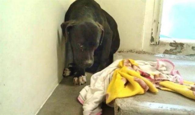 Он лежал и смотрел в пол, ожидая врачей с последним уколом… Но неожиданно пёс увидел животное, которое перевернуло его жизнь!