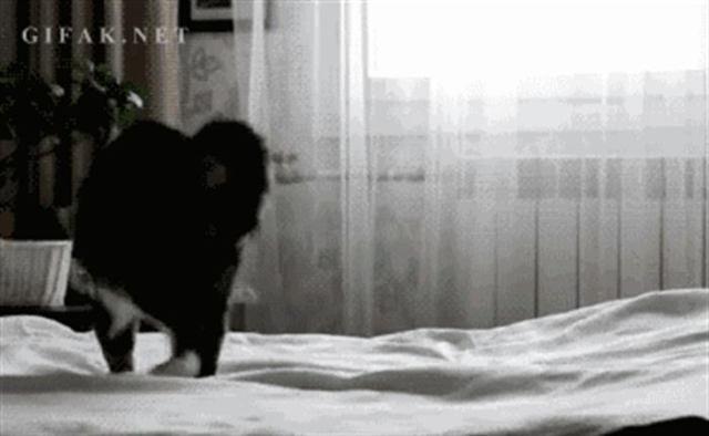 14 Вещей, которые обязан делать каждый уважающий себя кот
