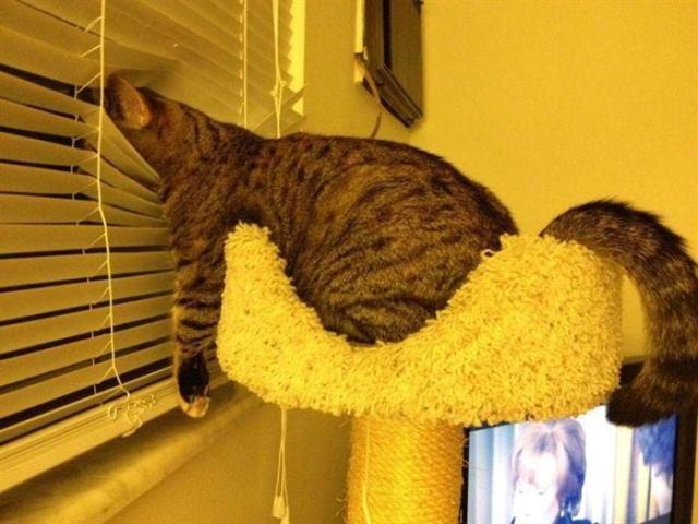 20 фотографий очень любопытных котов