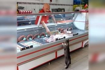 Каждый день этот кот приходит в мясную лавку. Только посмотрите, что происходит дальше!