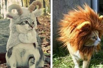 12 милых котиков, которые олицетворяют все знаки зодиака