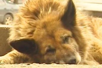 12 лет собака ждала своего погибшего хозяина… Трогающая до слез история современного Хатико!