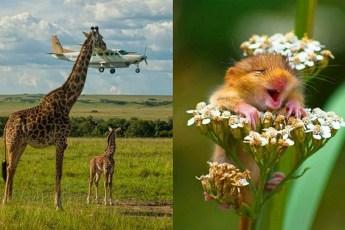 Самые лучшие фотографии дикой природы, которые поразили всю планету