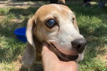 10 лет в клетке… Собаку использовали для опытов, и это надо было прекратить!