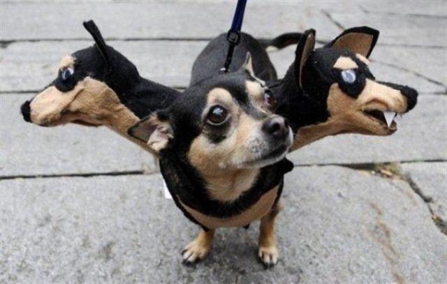 15 фото где хозяева прикалываются над своими животными