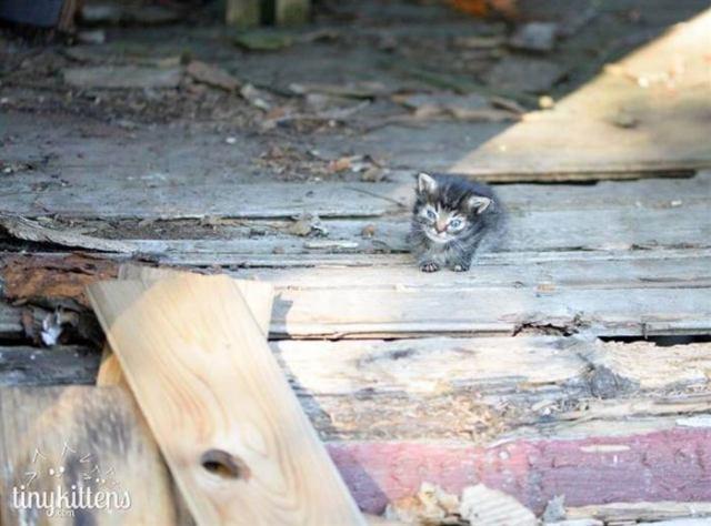 «Мы стали перед бульдозером, чтобы защитить малышей!» История котёнка, спасшего 60 пушистых душ