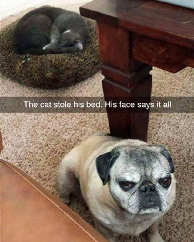 Кошки, которые отжали постель собак и наслаждаются этим