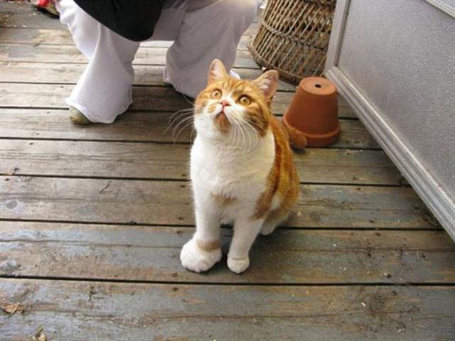 Глаза б мои не видели эту пасеку! 20 котов, проигравших схватку пчёлам