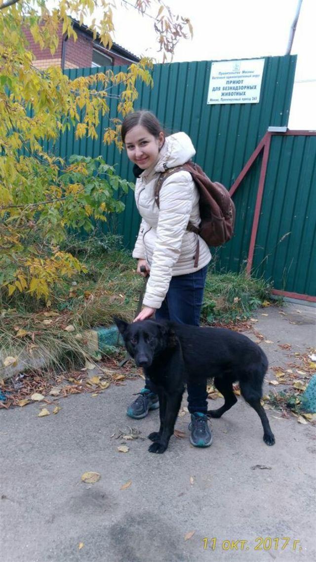 Среди 3000 собак девушка выбрала его! Приютский пёс боялся всего на свете, но его жизнь изменилась!
