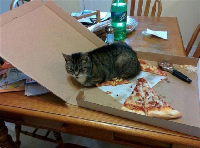Типичный день, который проживает кот