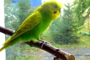 Умненький попугай без остановки что-то рассказывает. Невероятный позитив!