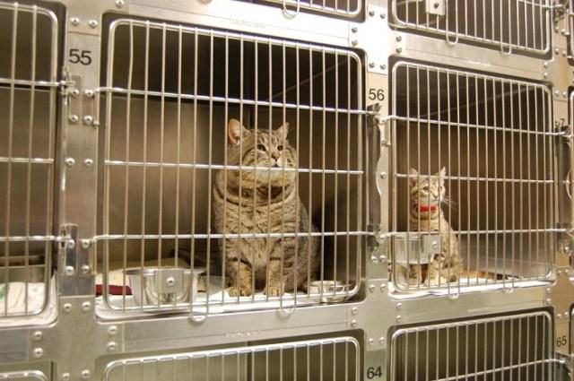 Поймали кота, воровавшего корм для собак из гаража