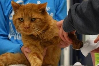 Десятилетний кот с редким заболеванием просил людей о помощи!
