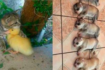 Снимки животных – настоящих милашек