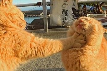 Самые суровые коты, которые готовы пуститься в любую драку!